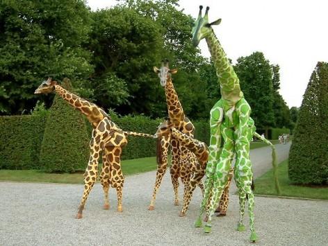 Giraffe - Teatro Pavano